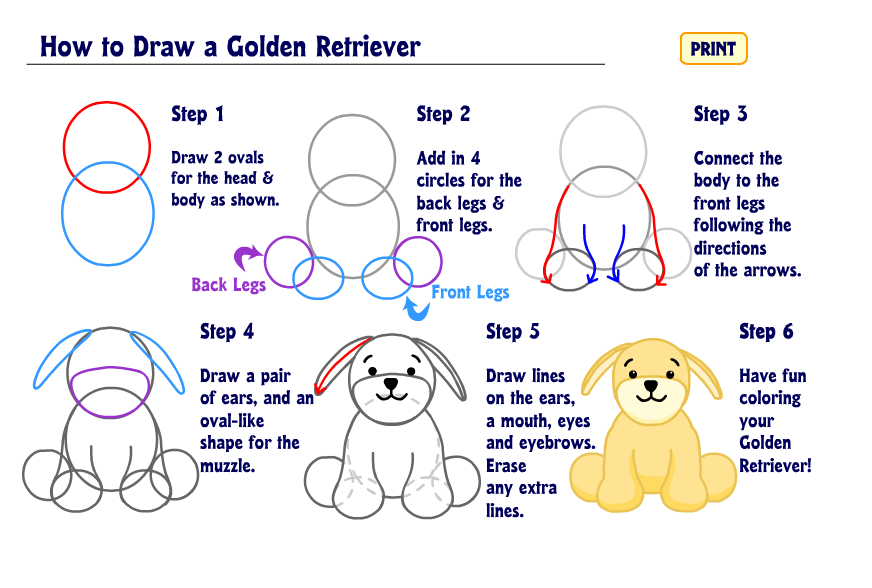 how to draw a golden retriever wkn webkinz newz