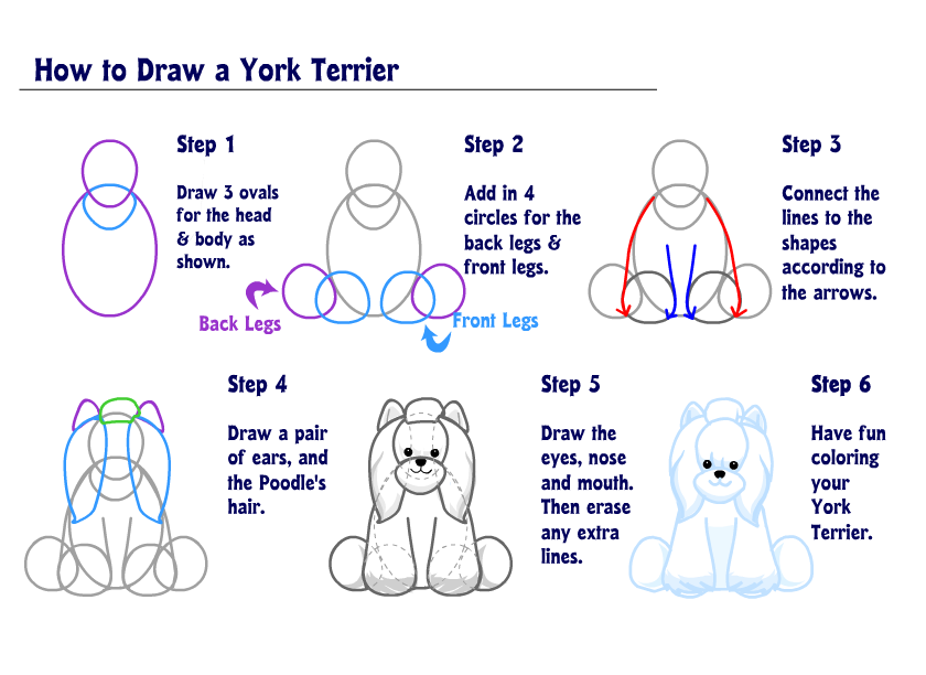 Learn how to Draw a Yorkie! | WKN: Webkinz Newz