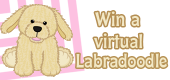 labradoodle-feature