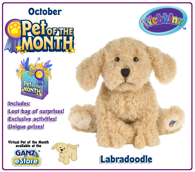 55 Responses To Adopt A Labradoodle In October!