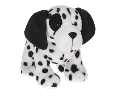 Salt & Pepper Dalmatian