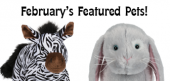 February Featured Pets Feature