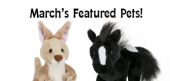 March Featured Pets Feature07682fgdd