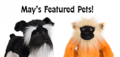 May Featured Pets Feature copy