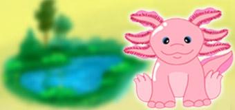 axolotl_psi_feature