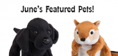 June Featured Pets Feature