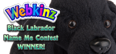 Black Labrador Name Me Contest- Featured