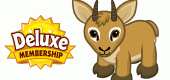 Dwarf-Antelope_WKNZ-FEATURE
