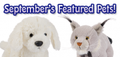 September Featured Pets Feature