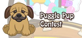 Win a Puggle Pup!