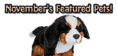 November Featured Pets Feature