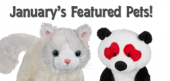 January Featured Pets Feature
