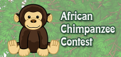african chimpanzee contest