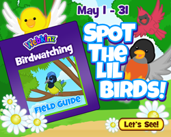 Birdwatching Guide