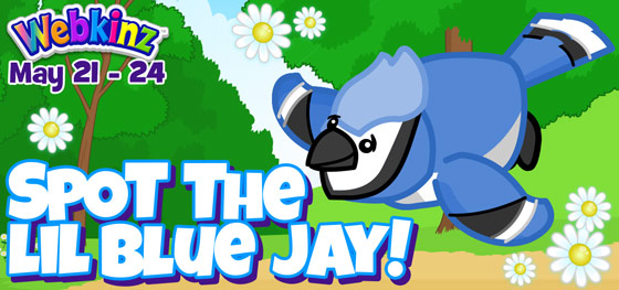 bluejay_FC_Feature