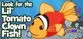 Lil_tomatoclown_fish_feature