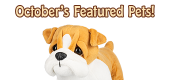 October's Featured Pets Feature