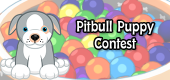 pitbull puppy contest