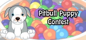 pitbull puppy contest