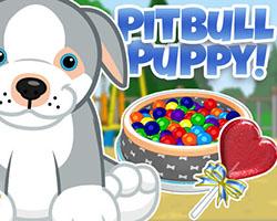 Pitbull Puppy - POTM