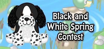 black and white springer contest