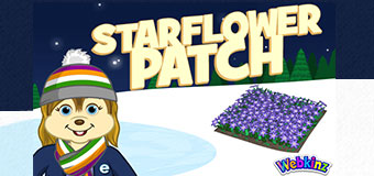 `wkz-2019-feat-ctreetie-starflower