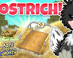 Ostrich - POTM