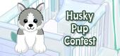 husky pup contest