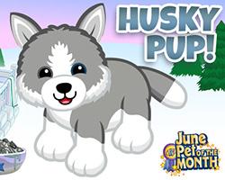 Husky Pup - POTM