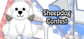 sheepdog contest - feature