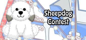 sheepdog contest - feature