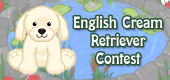 english cream retriever contest