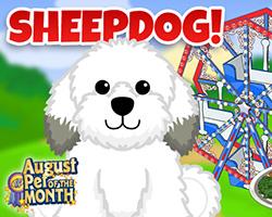 Sheepdog - POTM