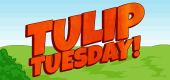 `TulipTuesday-Feature