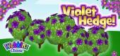 `violet_hedge_feature