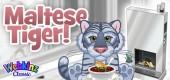 `maltese_tiger_feature