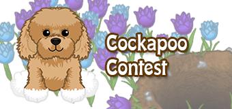 cockapoo-contest
